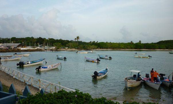 Buccoo Riff – Glasbodenboot Tour mit Strandaufenthalt
