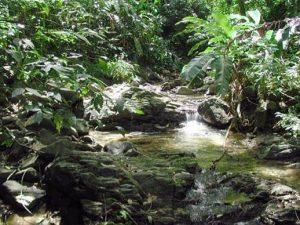 Regenwaldtouren auf Tobago in der Karibik. Erfahren Sie bei Tobago-Live alles um gut und zuverlässig organisierte Ausflüge und Adventure.