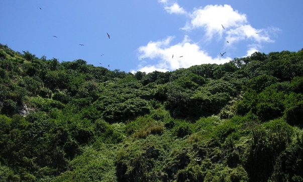 Regenwald Tour mit Besuch des Kolibrigartens