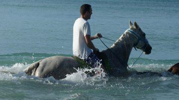 Tobago Schwimmen mit Pferden - Being with Horses