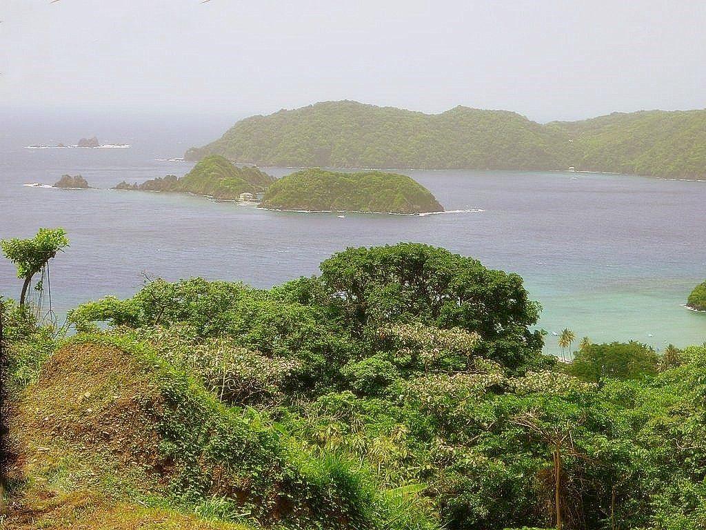 Regenwald am oberen Atlantik auf Tobago in der Karibik