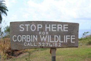 Corbin Local Wildlife ist ein gutes Ziel für Sightseeing, Natur, Tiere, Pflanzen, Schlangen, Schildkröten, Vögel auf Tobago und Trinidad und Tobago in der Karibik. Perfekt im Regenwald gelegen.