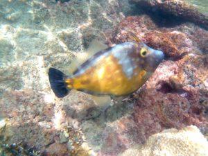 Bunte Unterwasserwelt in der Karibik in der Cotton Bay auf Tobago. Schnorcheln mit dem Katamaran Picante bei einem Ausflug.