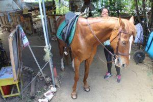 """Bei """"Being with Horses"""" steht das Wohl des Pferdes im Vordergrund"""
